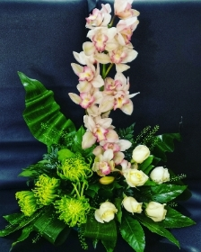 Cymbidium Delight
